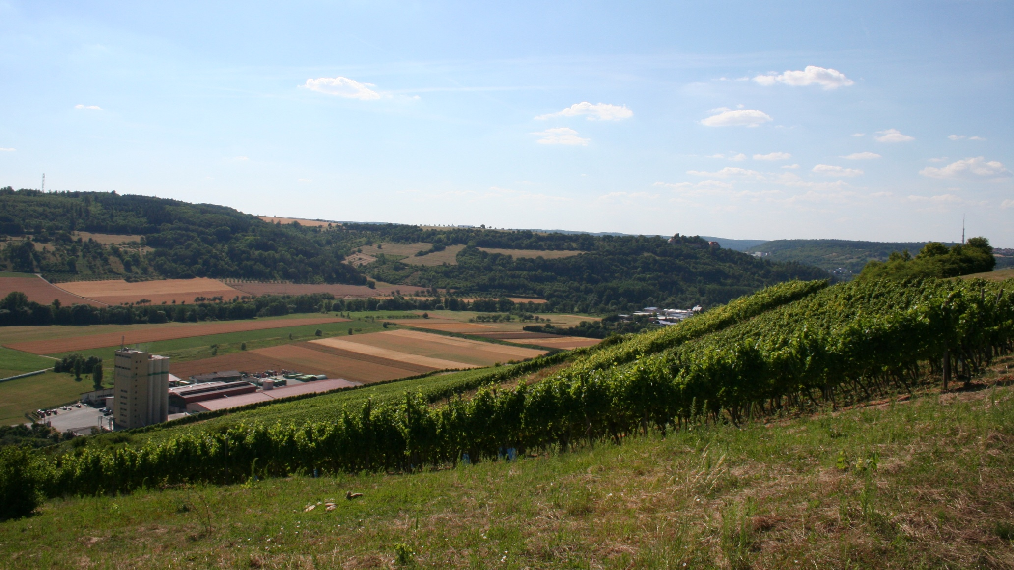 Markelsheim is surrounded by brachtvollen vineyards.